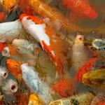 Moment: Goldfische oder 'Ein dicker Fisch sein'