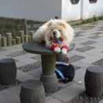 Chinesisches Neujahr: auf den Hund gekommen