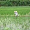 Momentaufnahme: Reisfeld bewässern vs Individualität